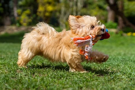 when can i take my puppy outside for a walk things to do with your pet archives jetpets