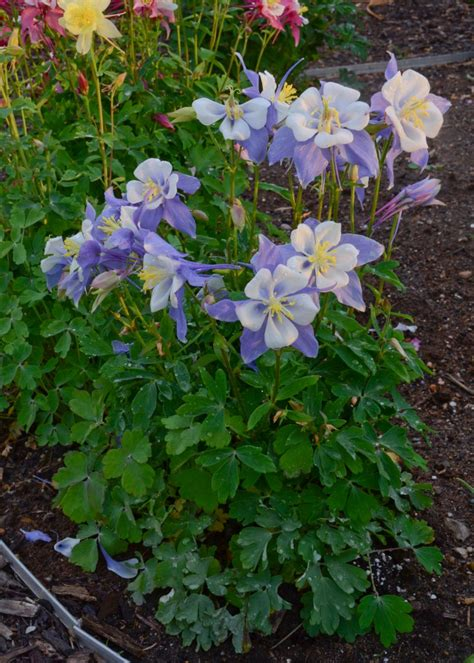 Flowering Perennials For Shade Gardens Perennial Flowers For Shade Gardens Hgtv