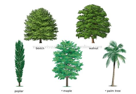tree types plants gardening plants tree examples of