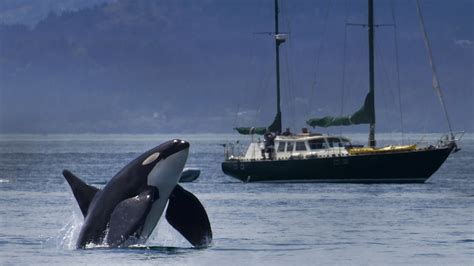 boat shipping utah noise from ships can pose a threat to killer whales