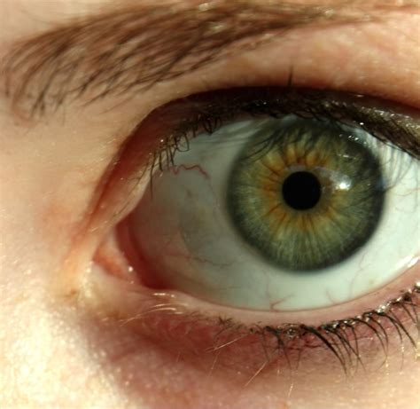 green eye color up of human by suren manvelyan source