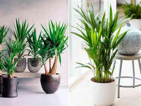 decoracion de plantas las mejores plantas para interiores noticias zonaprop