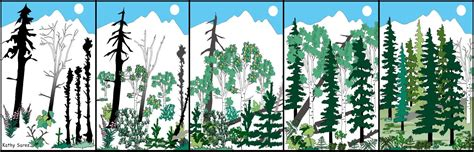 mosaic pattern of succession usfws alaska fire management