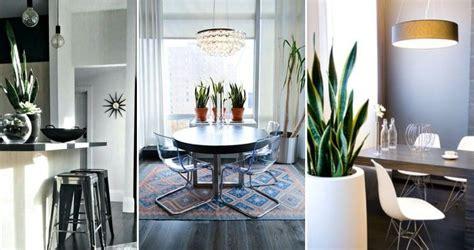 arredare casa con le piante arredare con le piante architettura e design a roma