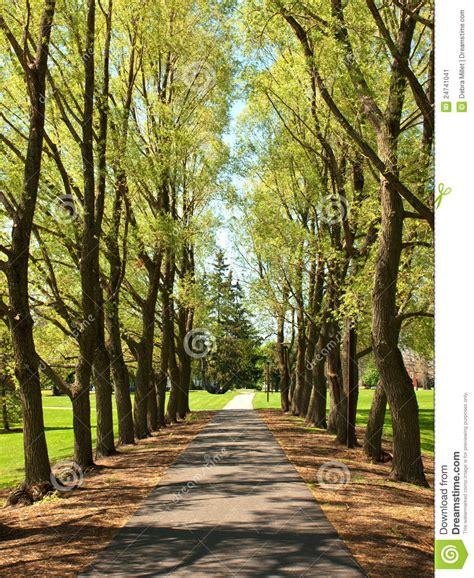 tree lined walkway stock image image 24741041