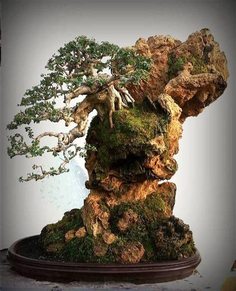 Ginseng Termahal 1183 best bonsai images on bonsai trees