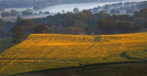 grinter farms 37 best ideas about grinter s sunflower farm on pinterest