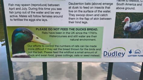 feeding the ducks at mary stevens park stourbridge