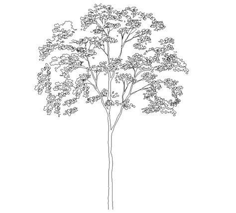 tree templates for autocad tree elevation cad symbol cadblocksfree cad blocks free
