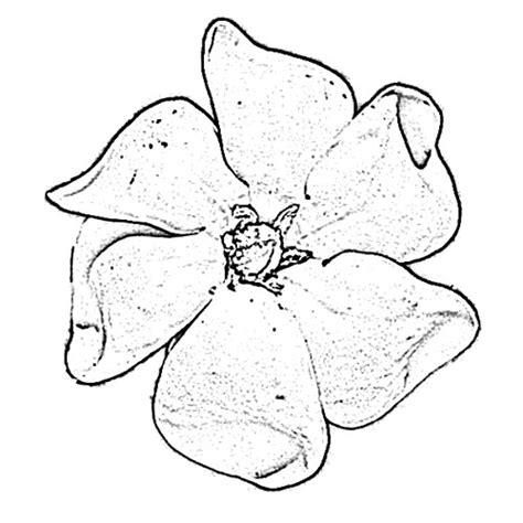 Gardenia Flower Drawing Gardenia Flower Sketch Image Sketch