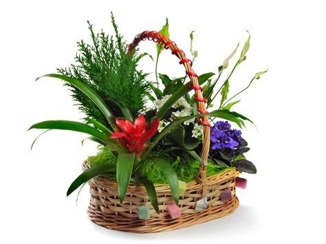bulbacee da fiore piante da salotto fiorista