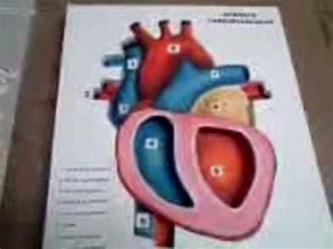 como hacer maquetas de corazon maqueta del coraz 243 n youtube