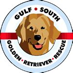 golden retriever rescue new orleans national rescue committee of the golden retriever club of
