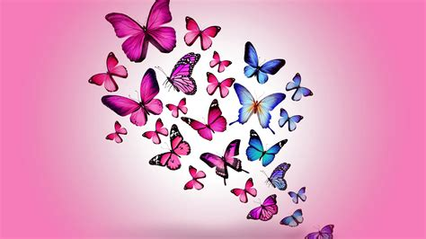 ppt templates free download butterfly butterfly pink background hq free download 9879