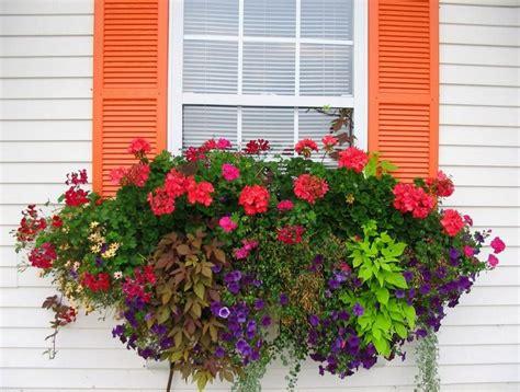 sun container garden ideas container gardening designs sun ideas home inspirations