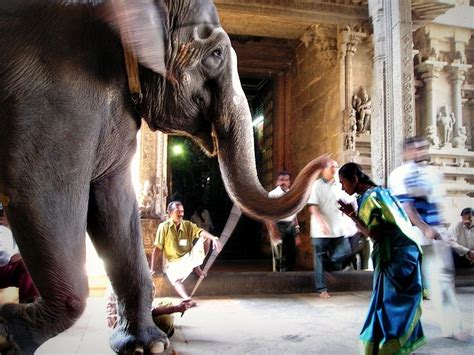 elephant biography in hindi learn basic hindi phrase for travel in india