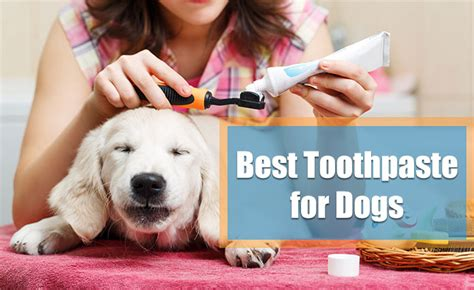 best toothpaste for dogs best toothpaste 2018 reviews and top picks s health