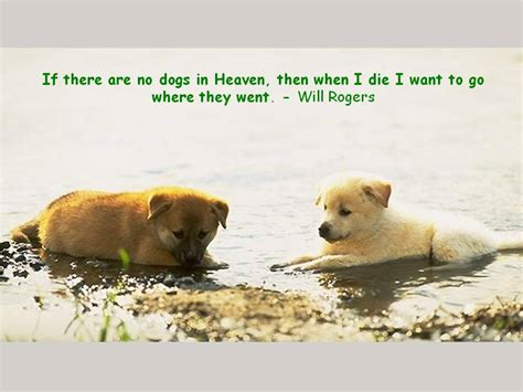 where do dogs go when they die if there are no dogs in heaven then when i die want to go where they went