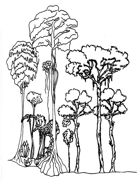 regenwald bastel und malvorlagen abenteuer regenwald