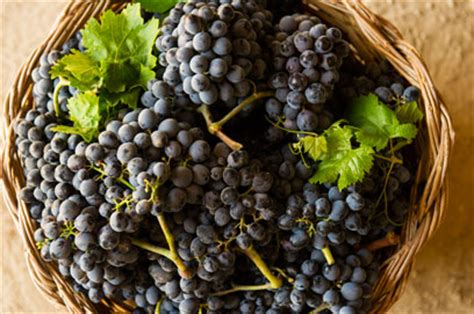 a sicilian experience wine travel food wtfa grape edventures books meet the grapes wines of sicily