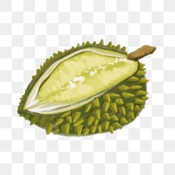 durian png images vector  psd files