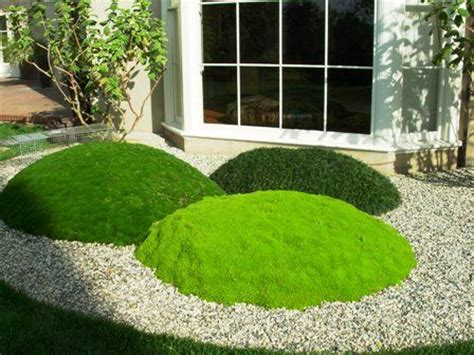 types of gravel for gardens 25 best ideas about moss garden on growing