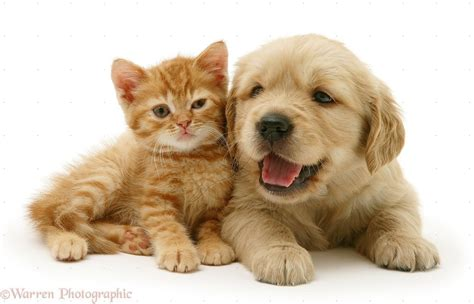 baby puppies and kittens puppies and kittens pict animal beautiful friends