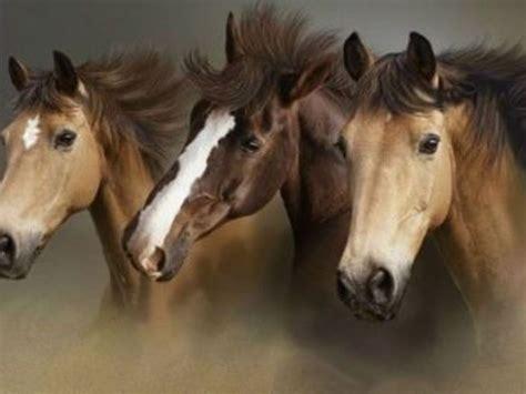 horses hd wallpapers