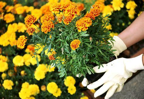 Garten Pflanzen Setzen by Obi Balkon Und Beetberater Infos Zu Balkonblumen