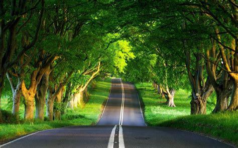 lihatlah pemandangan alam  hijau   indah