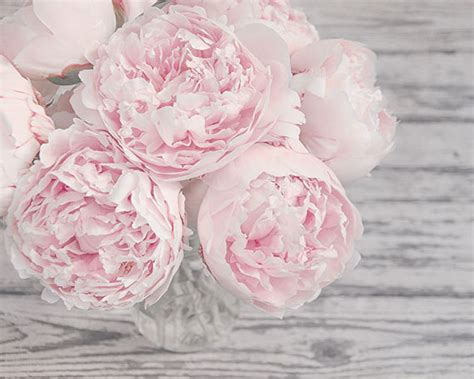 gray shabby chic flowers by large wall flower photography pink peonies pink and gray shabby chic flower nursery