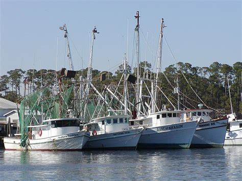 shrimp boat orange beach 50 best images about road trip no 9 gulf coast birding