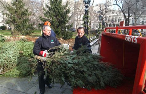 recycle your christmas tree at mulchfest 2016 inhabitat