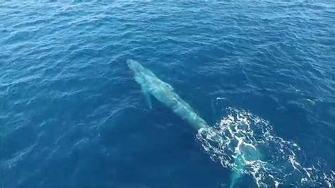 whale malibu blue whales point dume b