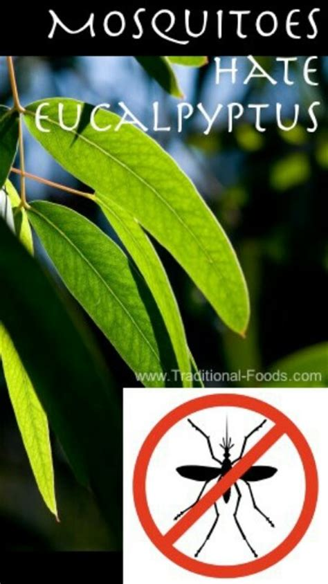 scents to keep mosquitoes away 34 best images about lawn and garden on