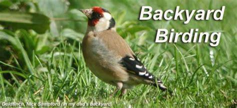 backyard birding backyard birding