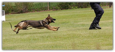 how to dogs to attack how to stop attacks when running running logthatrun