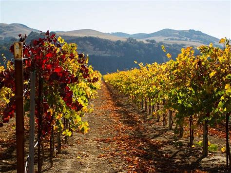 rancho sisquoc winery wedding the new top 10 wine cities travel channel