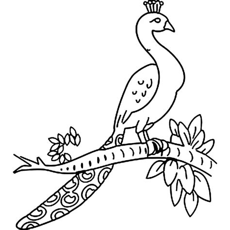 simple peacock coloring page easy pencil drawing of peacock drawings nocturnal