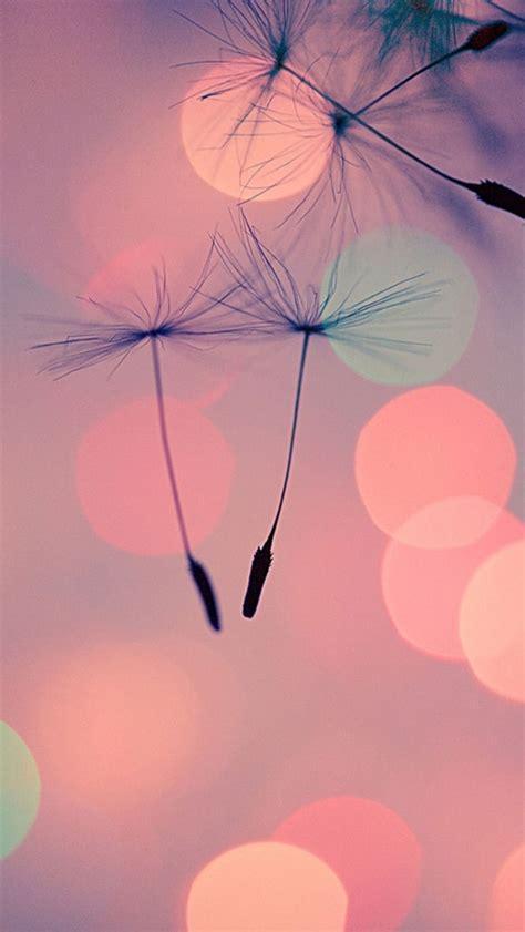 Qw Wallpaper Dandelion Pink the dandelion seeds the iphone wallpapers