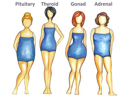 Ovary Type Detox by The Thyroid Type Is One Of The Four Types