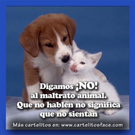 no maltrato animal no al maltrato animal carteles y frases para compartir
