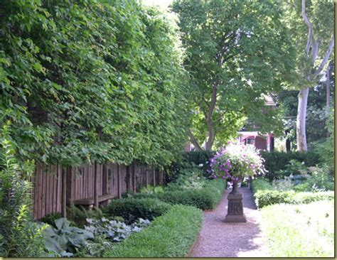best backyard trees for privacy curb appeal the best privacy trees what to plant if you