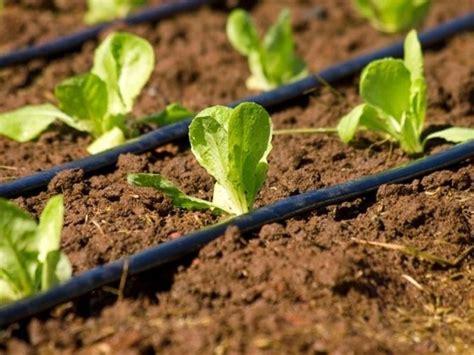 irrigazione a goccia vasi irrigazione orto impianto irrigazione irrigare l orto