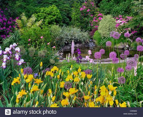 Iris Flower Garden Small Garden Pond Water Lilies Bog Plants Flower Plant Pots Stock Chsbahrain