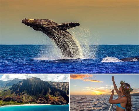 kauai small boat tours where to find the whales on each hawaiian island hawaii