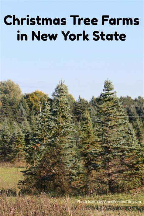 christmas tree farms upstate ny tree farms in new york state