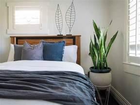best bedroom plants leaf love the best plants to grow in your bedroom