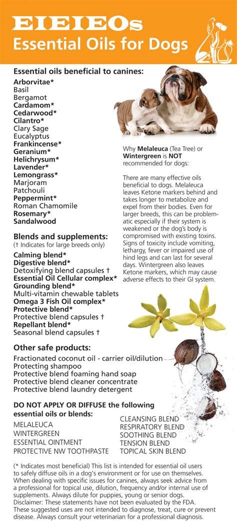 essential oils for dogs essential oils pets and on