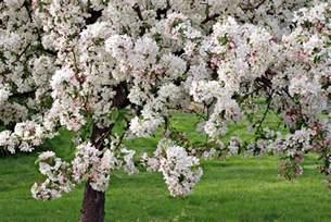top 10 plants for clay soil the english garden